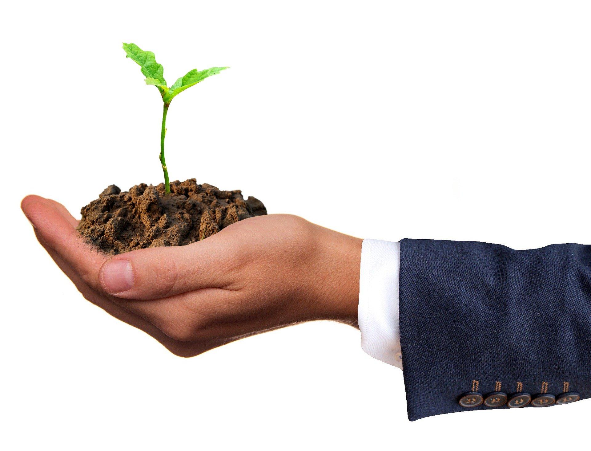 Sarah Richter auf Pixabay_Pflanze in Hand business